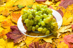 Raisin sur le fond de feuilles d'automne Photos libres de droits