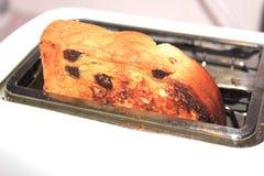 Raisin toast. Cooked raisin toast popped up in toaster Royalty Free Stock Photo
