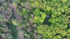 Raising aerial footage above forest path crossroad, spring evening light, 4K. Raising aerial drone footage above deciduous central European lowland forest path stock video footage
