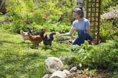 Raising free-range chickens. Woman feeding free range chickens in her garden Royalty Free Stock Photos