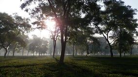 Raising Sun In a Tea Garden in India royalty free stock photography