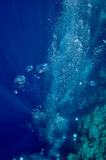 Raising underwater bubbles in the blue sea Stock Images
