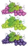 Raisins illustration stock