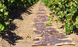 raisins photos libres de droits