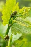 Raisins au printemps Photographie stock libre de droits