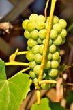 Raisins avec la feuille image stock
