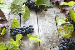 Raisins avec le fond vert de lames Photos stock