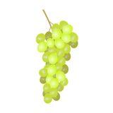 Raisins blancs illustration stock
