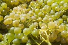 Raisins blancs pour faire le vin image stock