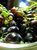 Raisins bleus Images libres de droits