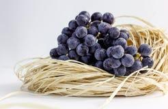 Raisins bleus Images stock