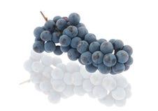 Raisins bleus avec la réflexion Photo stock