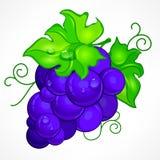 Raisins bleus de groupe sur le blanc Photographie stock