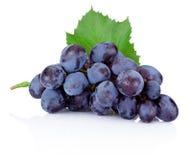 Raisins bleus frais avec la feuille verte sur le fond blanc Photo stock