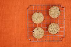 Raisins chip cookies. Round chip cookies with raisins and integral wheat flour Royalty Free Stock Images