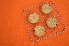 Raisins chip cookies. Round chip cookies with raisins and integral wheat flour Stock Photography