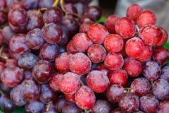 Raisins d'obscurité de fond de raisins de vin rouge images stock