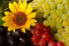 Raisins dans la boîte à fruit de cru photographie stock