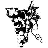 Raisins dans les vignes avec des lames. illustration de vecteur