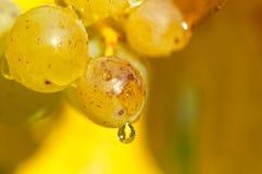 Raisins de chardonnay Photos libres de droits