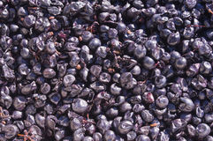 Raisins de cuve, la Californie Photo libre de droits