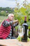Raisins de examen d'homme supérieur dans le vignoble Photographie stock libre de droits