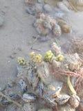 Raisins de mer ? ! Photo libre de droits