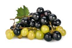 Raisins de Muscat Photos stock