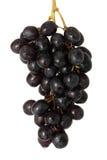 raisins de table Image stock
