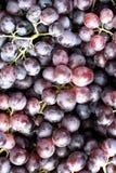 Raisins de vin rouge Images libres de droits