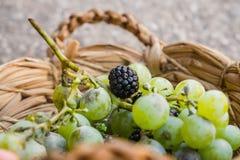 Raisins et mûres Photos libres de droits