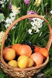 Raisins et pommes noirs juteux dans un panier dans le jardin entour? par des fleurs de ressort avec le plan rapproch? de baisses photos stock