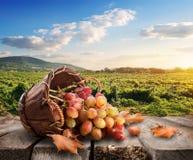 Raisins et vigne Images libres de droits