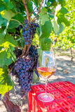 Raisins et vin rouge en verre dans le vignoble Moisson de la saison photographie stock