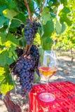 Raisins et vin rouge en verre dans le vignoble Moisson de la saison image stock