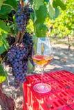 Raisins et vin rouge en verre dans le vignoble Moisson de la saison photo stock