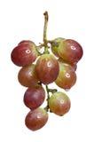 Raisins frais Photo libre de droits