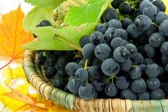 Raisins frais dans un panier Image libre de droits