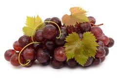 Raisins juteux photo stock