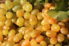 Raisins juteux mûrs frais comme fond photographie stock