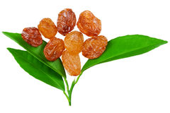 Raisins with a leaves Royalty Free Stock Photography