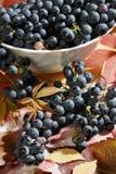 Raisins mûrs et frais après moisson photo libre de droits