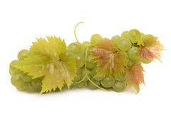 Raisins mûrs Photo stock
