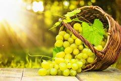 Raisins mûrs dans le panier en osier Images stock