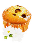 Raisins Muffin Stock Photos