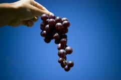 Raisins noirs photo stock