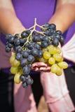 Raisins noirs et blancs dans des mains femelles Photos stock