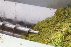 Raisins récemment récoltés de hanepoot passant par la presse de raisin image libre de droits