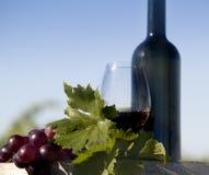 Raisins rouges et vin Images libres de droits