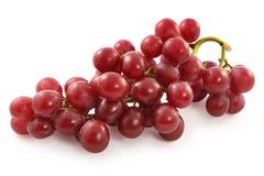 Raisins rouges juteux mûrs avec de grandes baies Photos stock